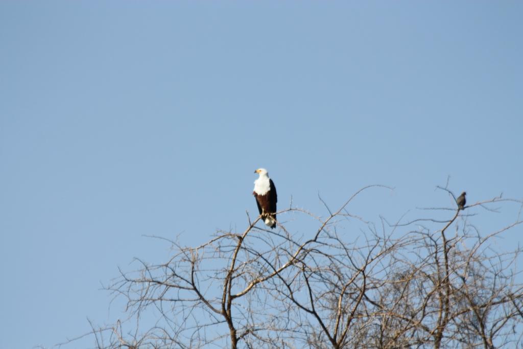 J+95 - Nechisar National Park et Village Dorzé