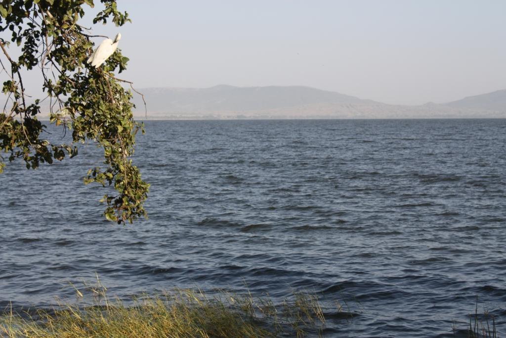 J+102 - Awasa et le parc national des lacs Abiyata et Shala