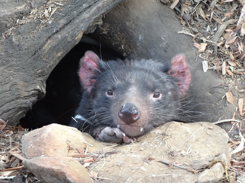 Au diable la tasmanie !!