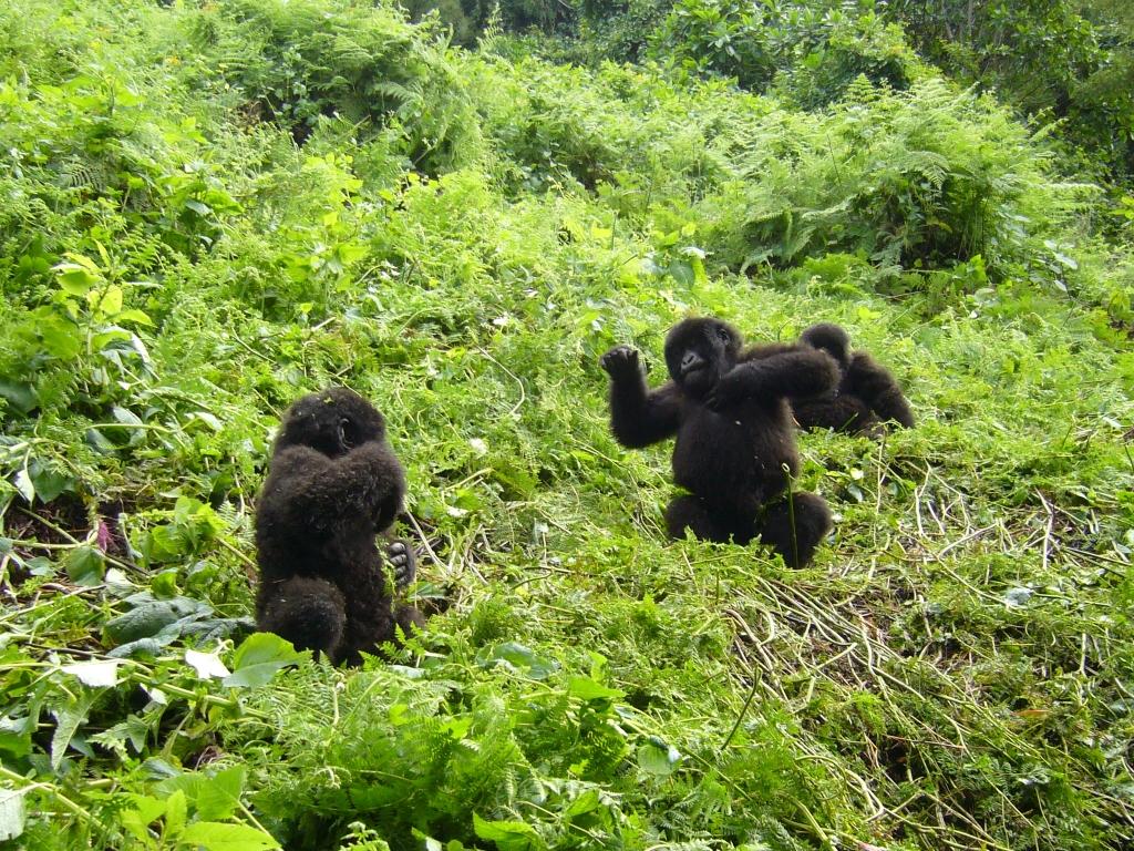 Rwanda, Kigeri et parc national des volcans à Ruhengeri