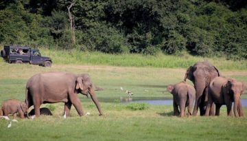 Partir au Sri Lanka en février