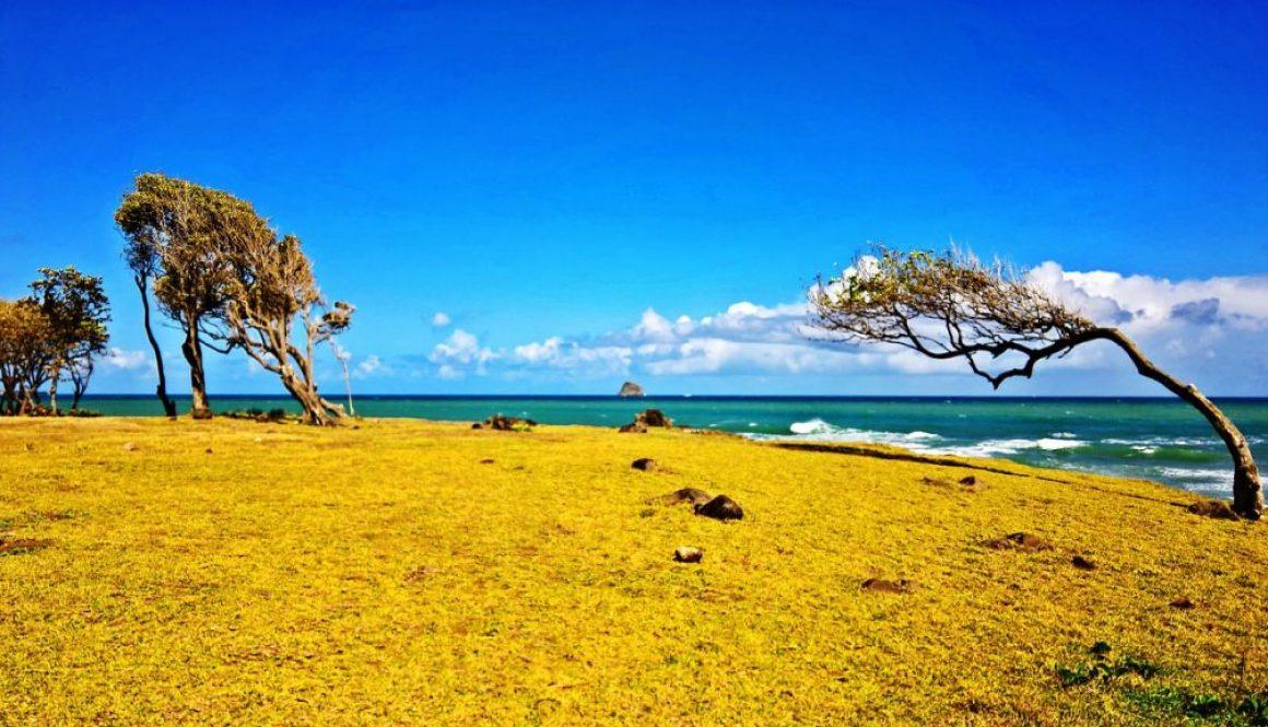 Partir en Guadeloupe en novembre