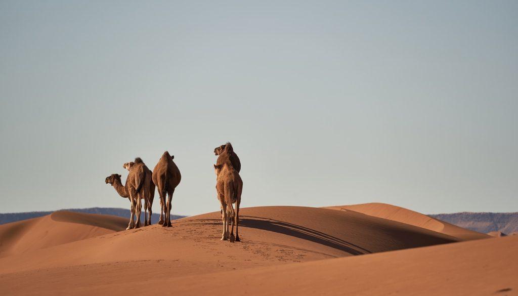 Partir au maroc en avril