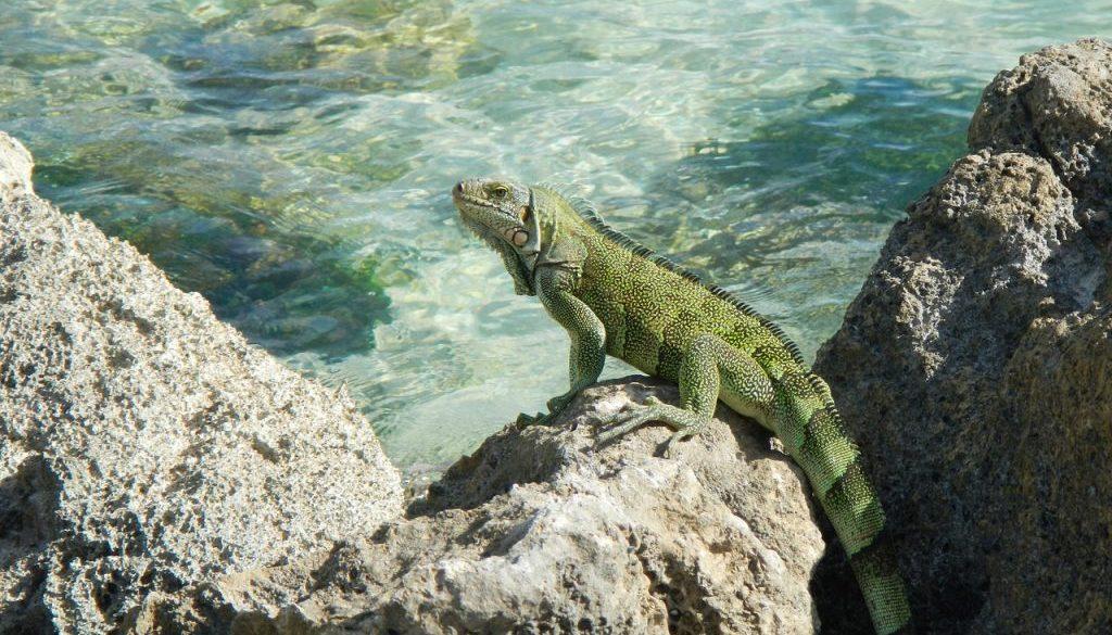 Partir en Guadeloupe en septembre