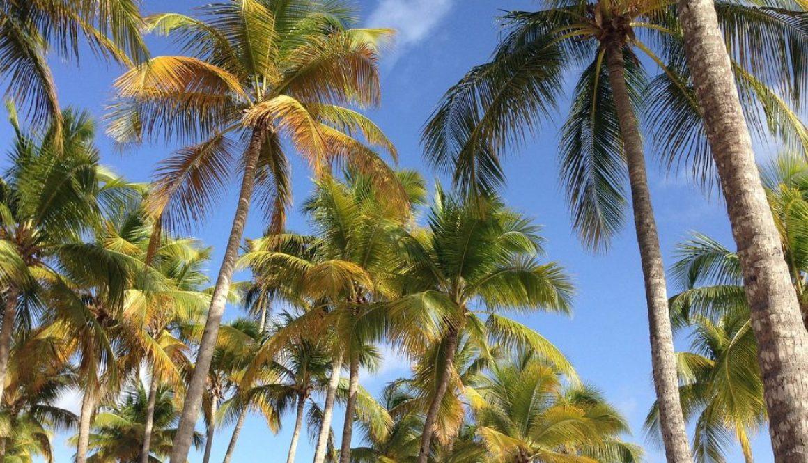 Partir en Guadeloupe en février