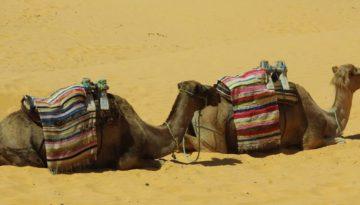 Partir en Egypte en mai