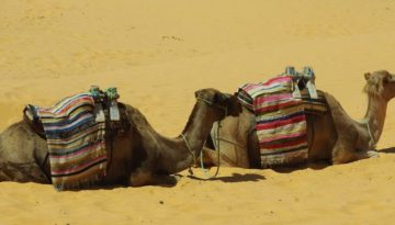 Partir en Tunisie en mai