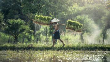 Partir en Vacances au Birmanie (Myanmar ) en décembre
