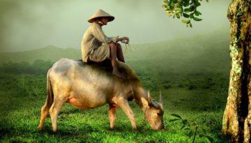 Partir en Vacances au Birmanie (Myanmar ) en novembre